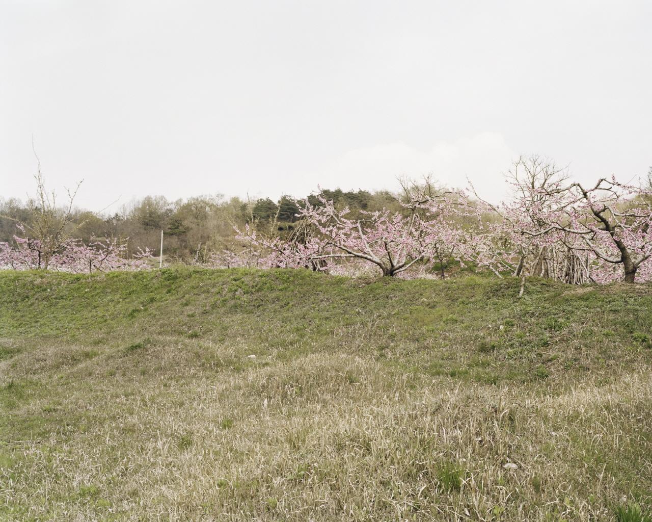 The Ground, Goesan-gun, Chungcheongbuk-do, Koera, 2006