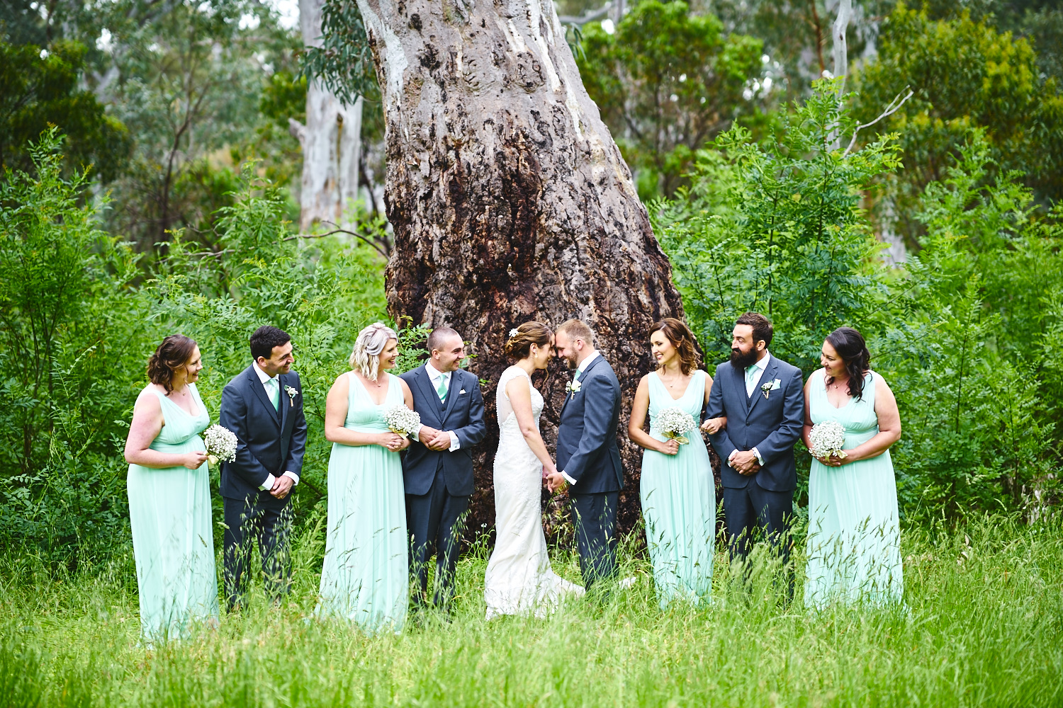 bridal party tree belair national park adelaide