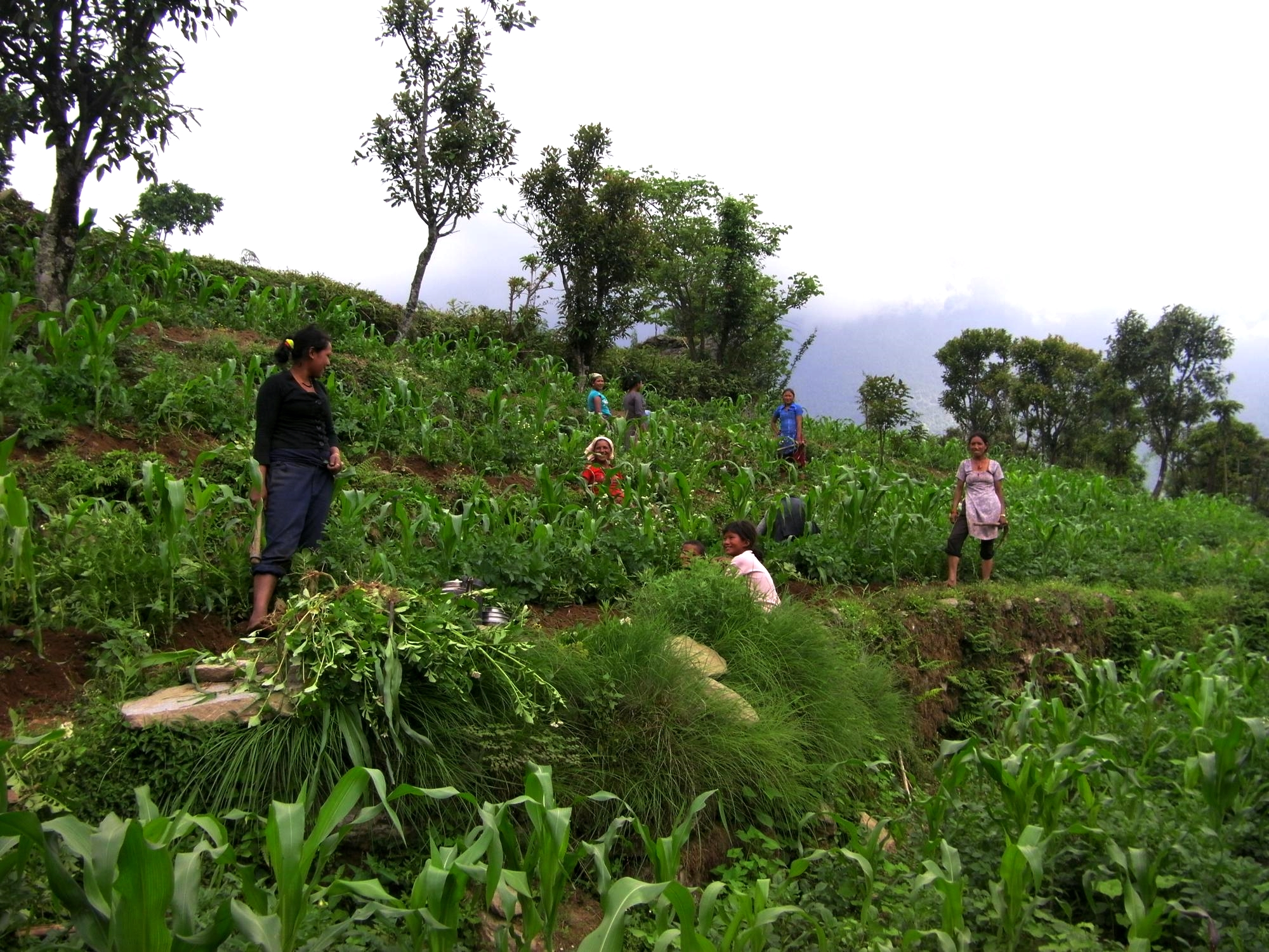Women working in the field near Bumburi