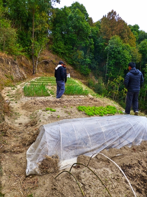 Nagarkot_Organic_Garden_Adventure_Alternative_Nepal.jpg