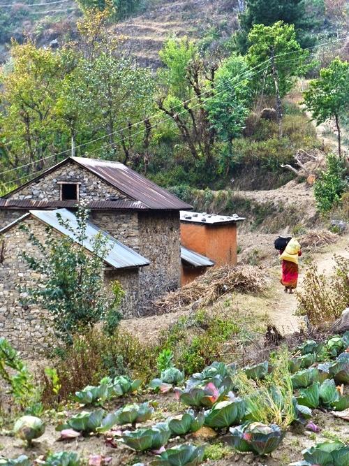 Nepali_Woman_Working_Farm_Adventure_Alternative_Nepal.jpg