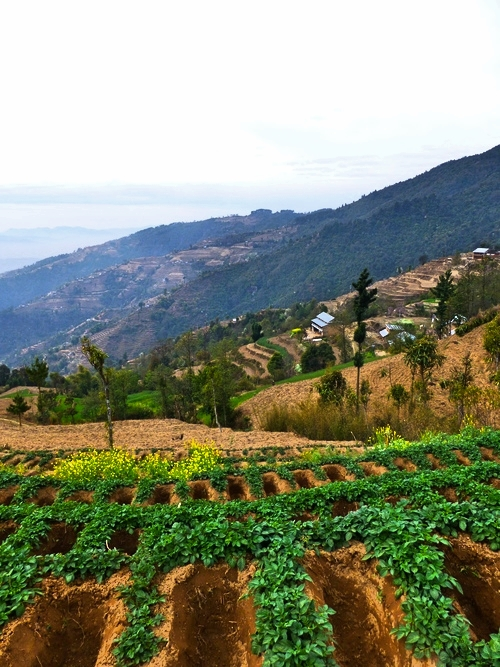 Organic_Garden_Adventure_Alternative_Nepal.jpg