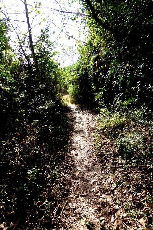 Trek_Trail_Adventure_Alternative_Nepal.jpg