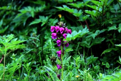 Flora allong the Langtang Valley trek