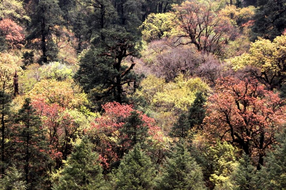 the magnificent vegetation - Langtang Valley Trek