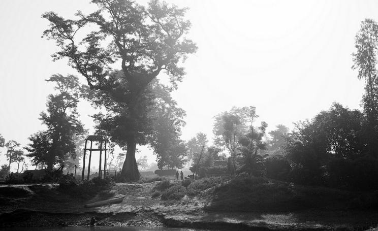 bardia jungle1.PNG
