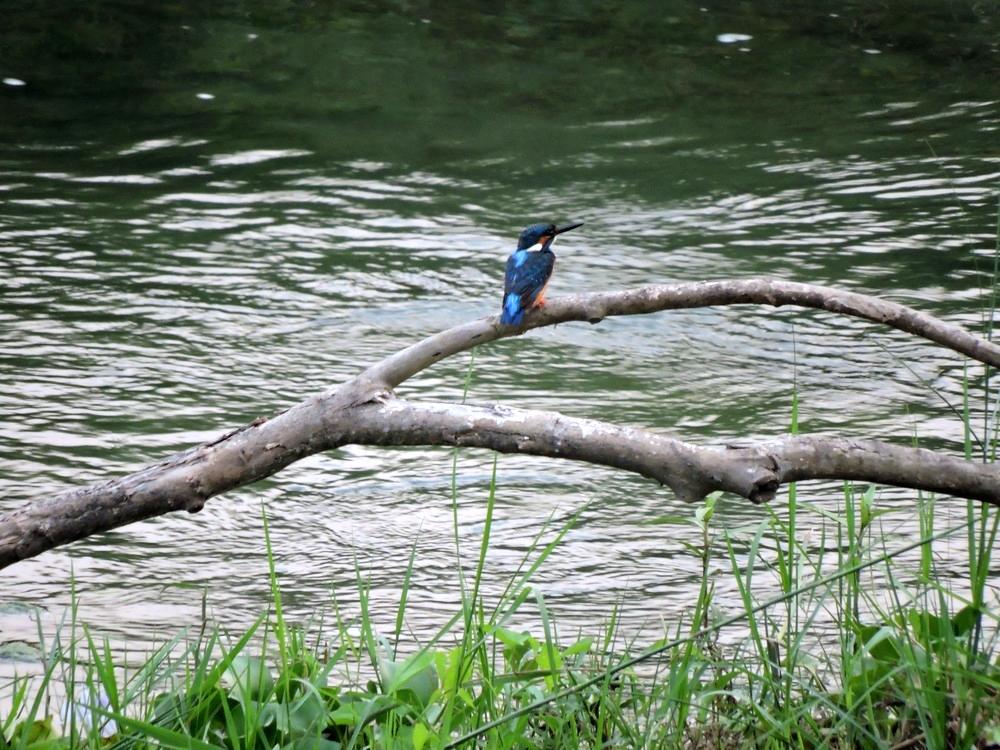 chitwan-bird3.jpg