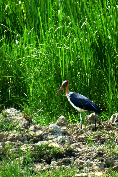 chitwan-bird4.jpg