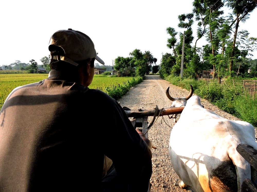 chitwan-transport.jpg