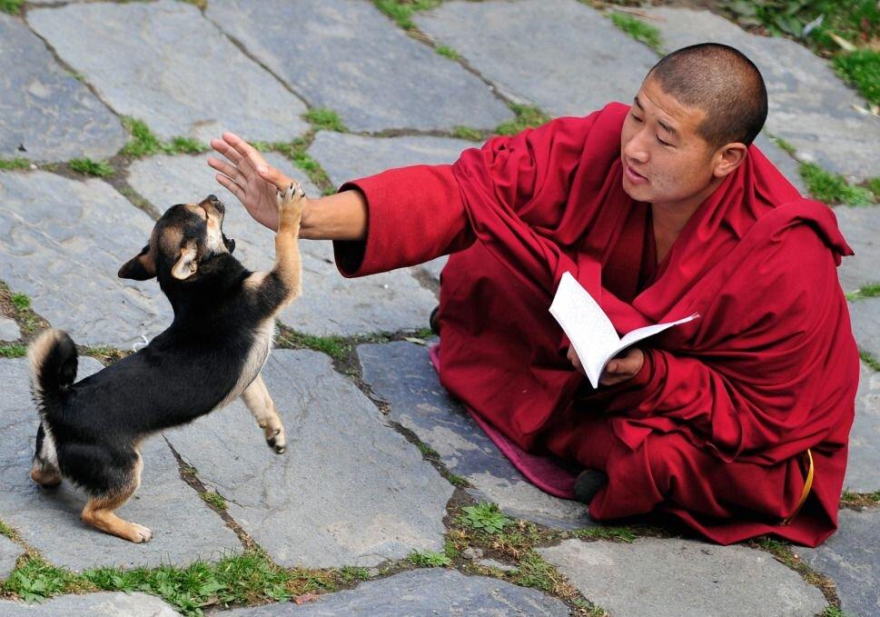 Monk Teaching -