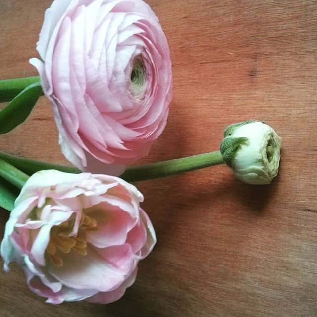 Ranunculus and double tulip