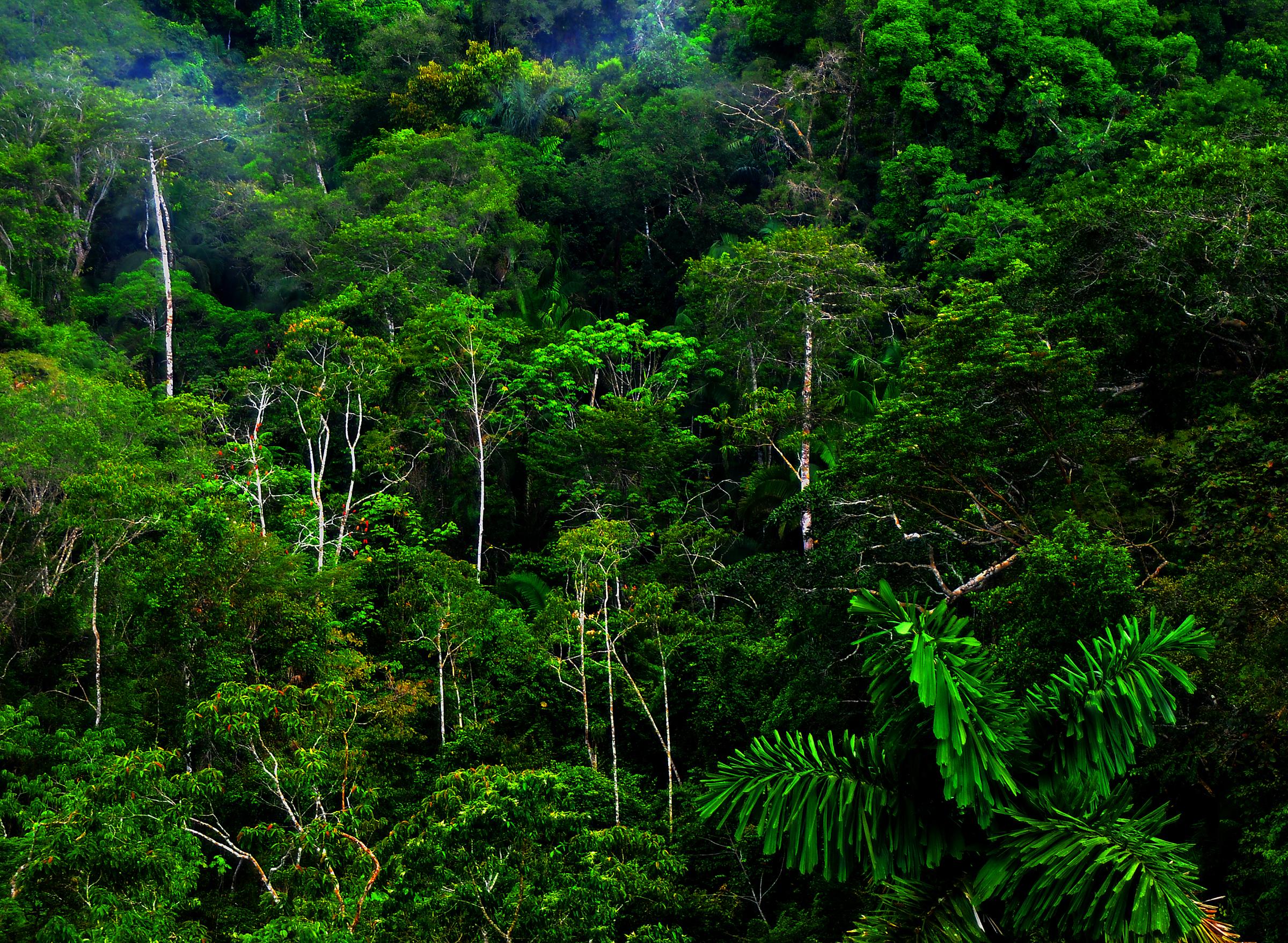 rain-forest1a.jpg