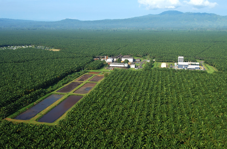 klimaschutzprojekt-papua-neuguinea-7141-4.jpg