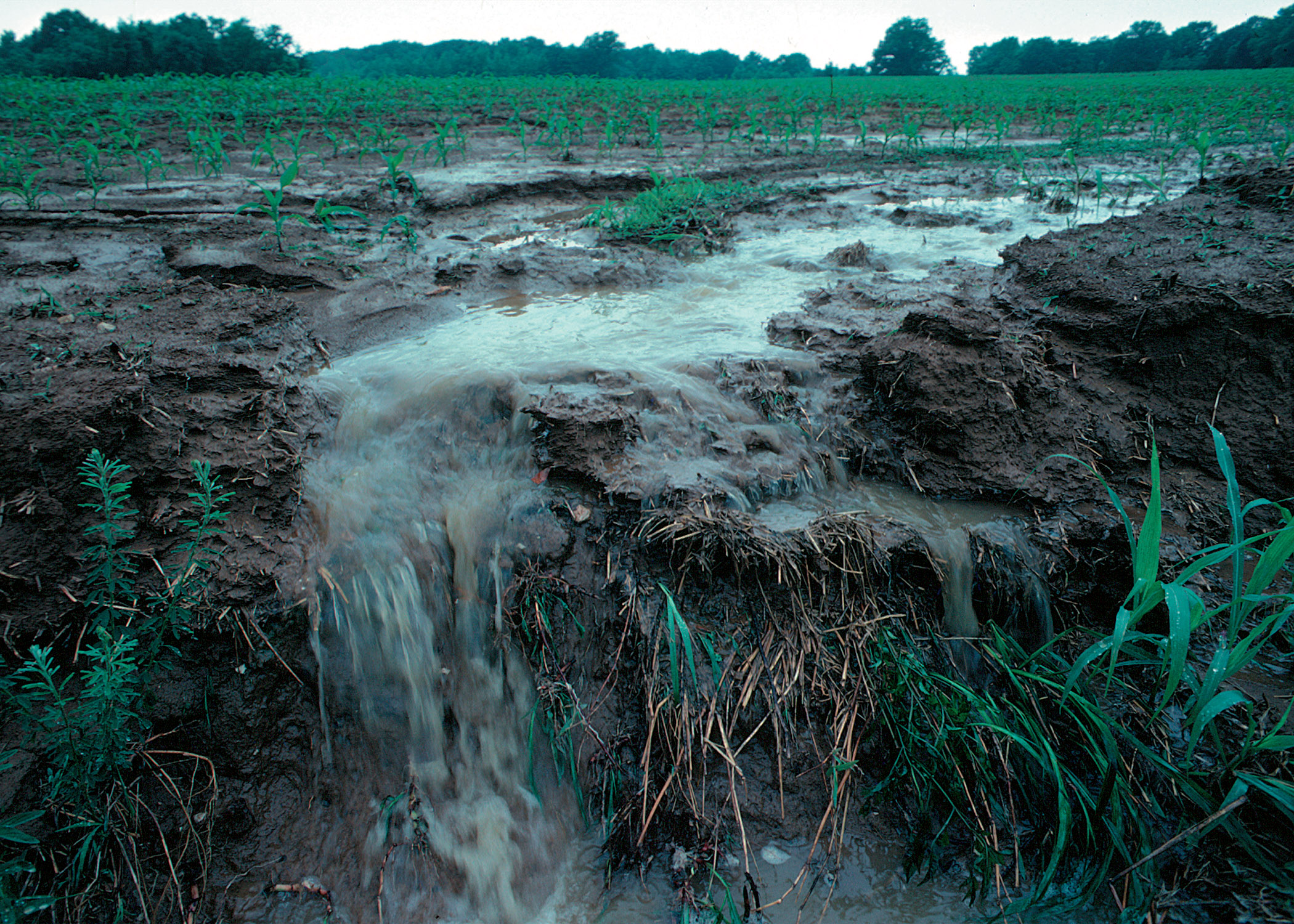 However, a lot of fertilizer is never used by plants. Fertilizer runs off farm fields and lawns into local waterways.