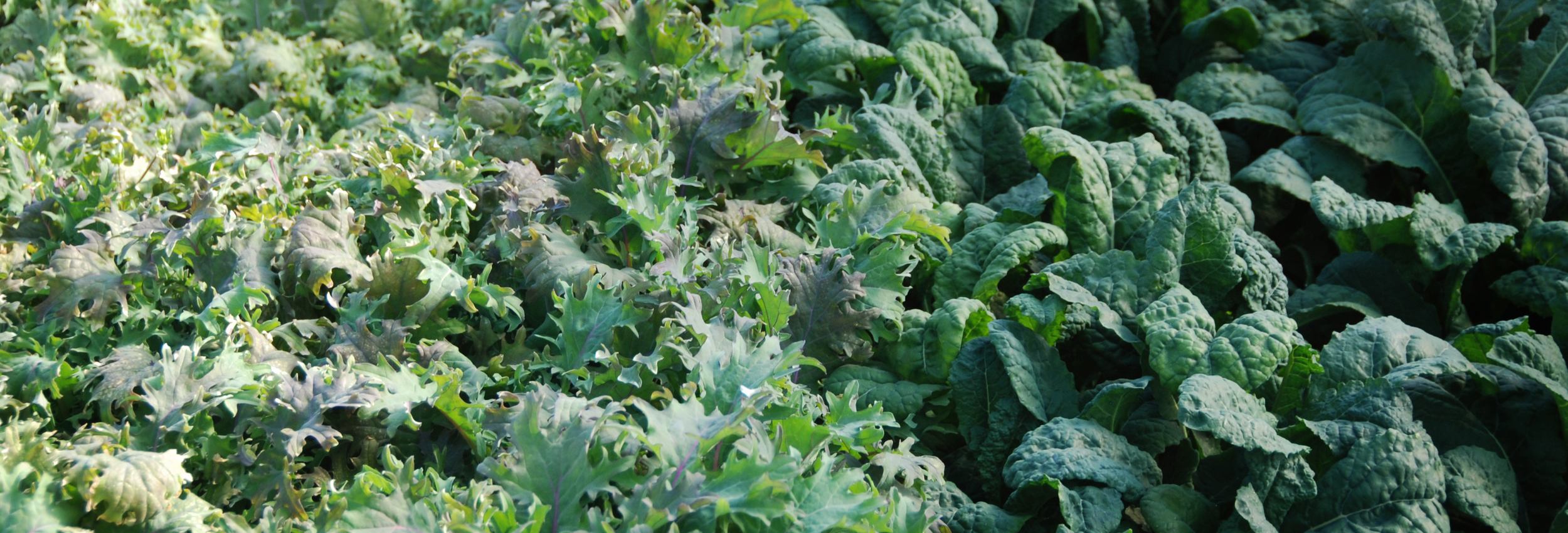 kale cover photo.jpg