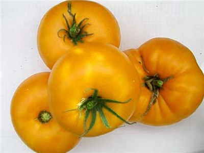 YELLOW BRANDYWINE*    Large Yellow Tomato