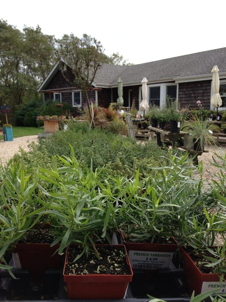 herbworkshop.jpg