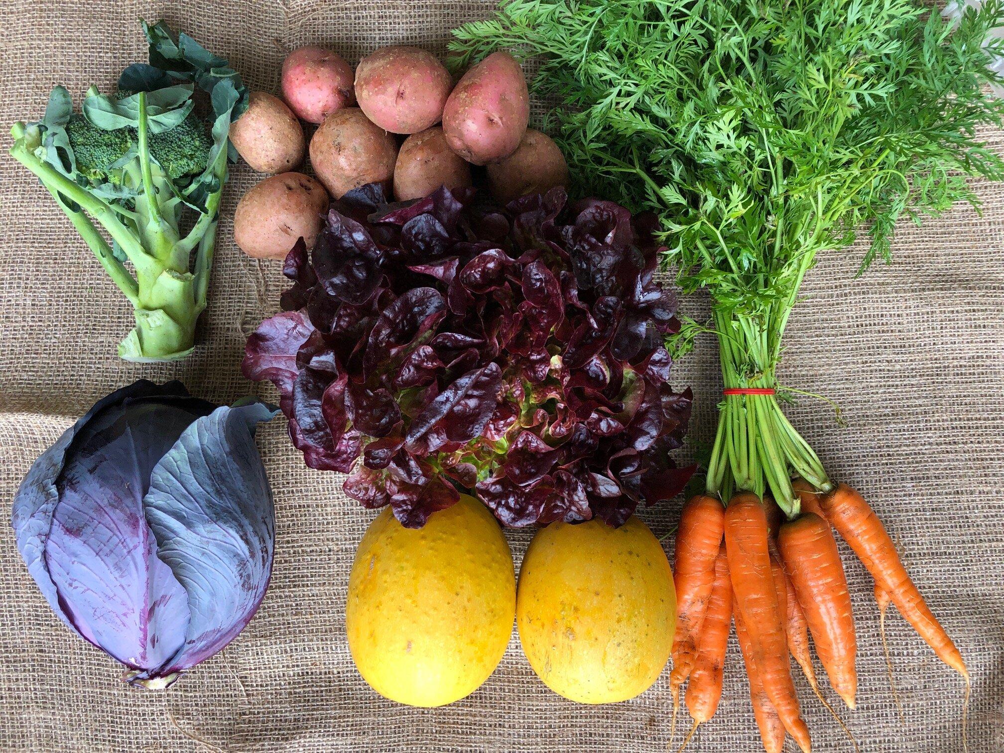 WEEK 1   1 head Red Cabbage  1 bunch Carrots  2 Spaghetti Squash  1 head Lettuce  1 head Broccoli  2 lbs Sweet Potatoes