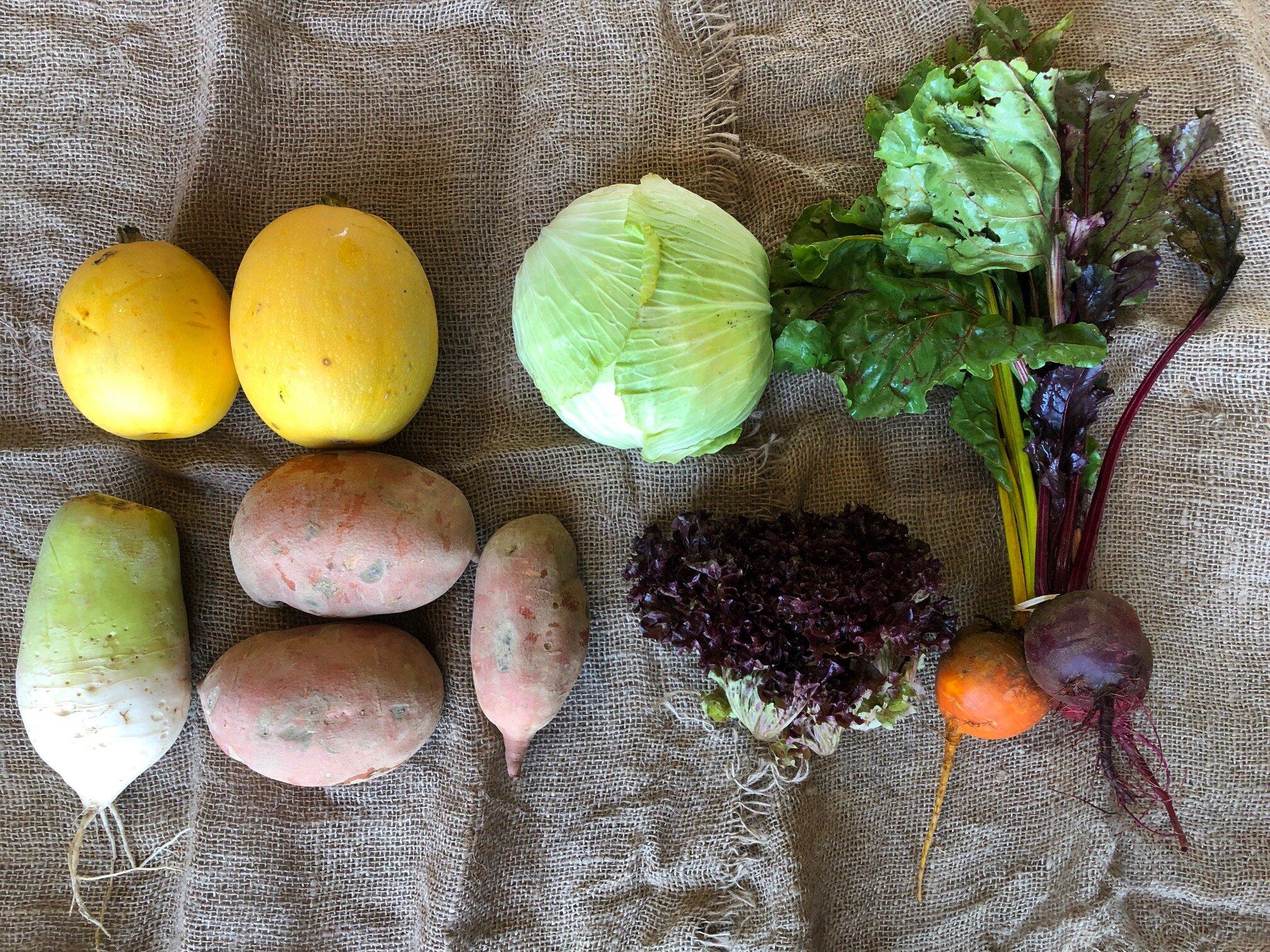 WEEK 4:   3 lbs Sweet Potatoes  1 head Red Cabbage  1 bunch Beets  2 Spaghetti Squash  1 bunch Lettuce  1 Korean Moo Radish