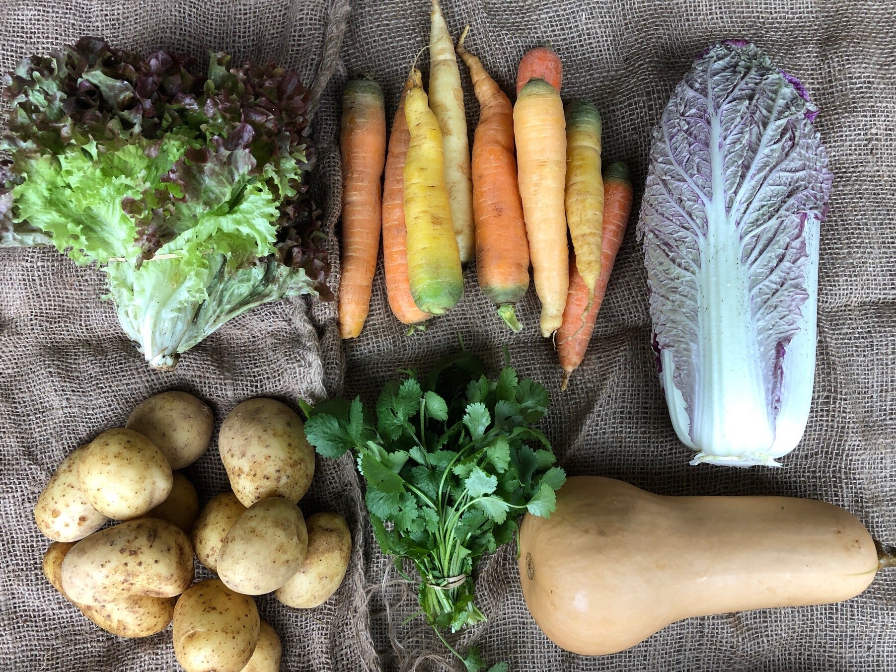 WEEK 5:   2 lbs Gold Potatoes  1 head Purple Napa Cabbage  2 lbs Carrots  1 Butternut Squash  1 bunch Lettuce  1 bunch Cilantro