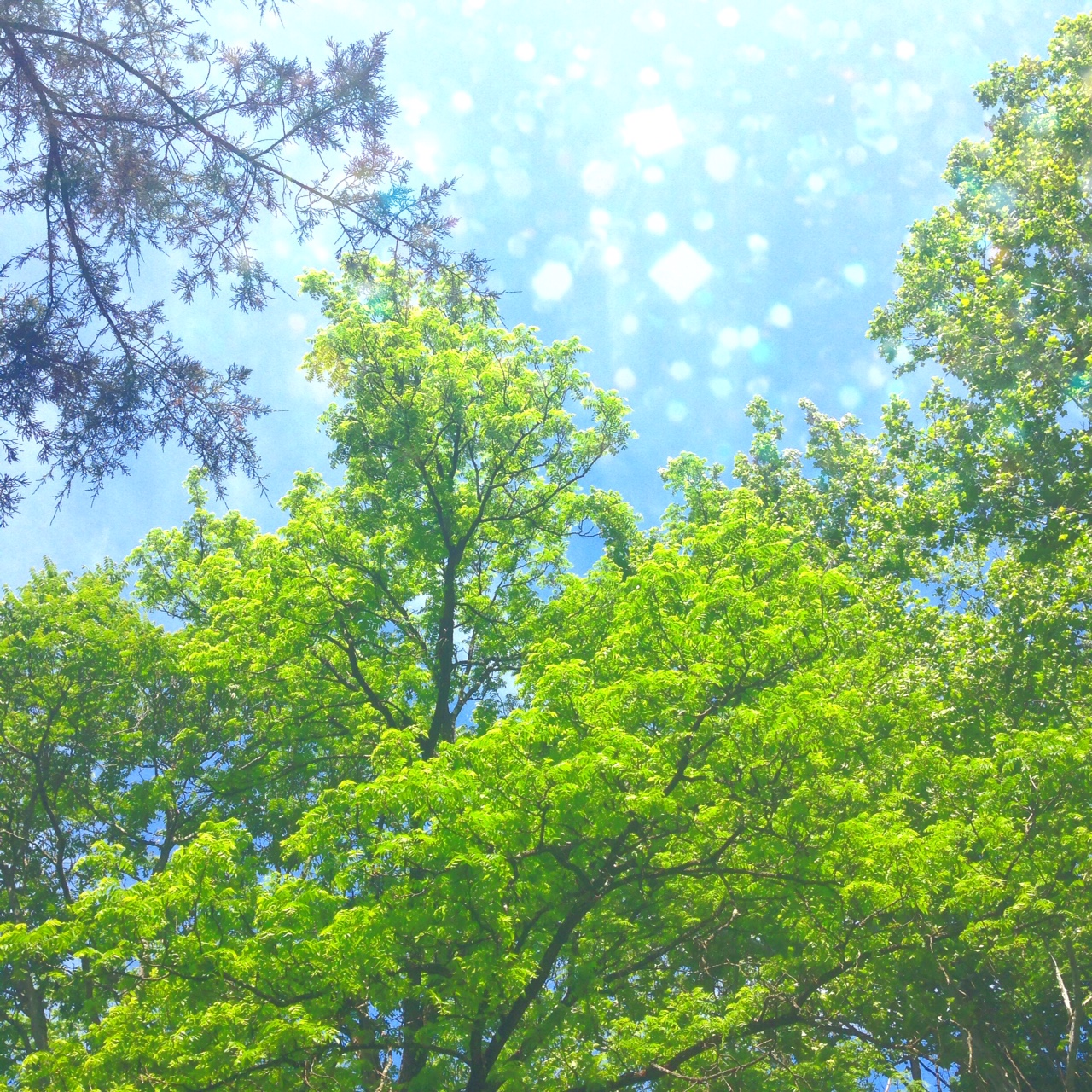 A glimpse of the canopy in my yard.