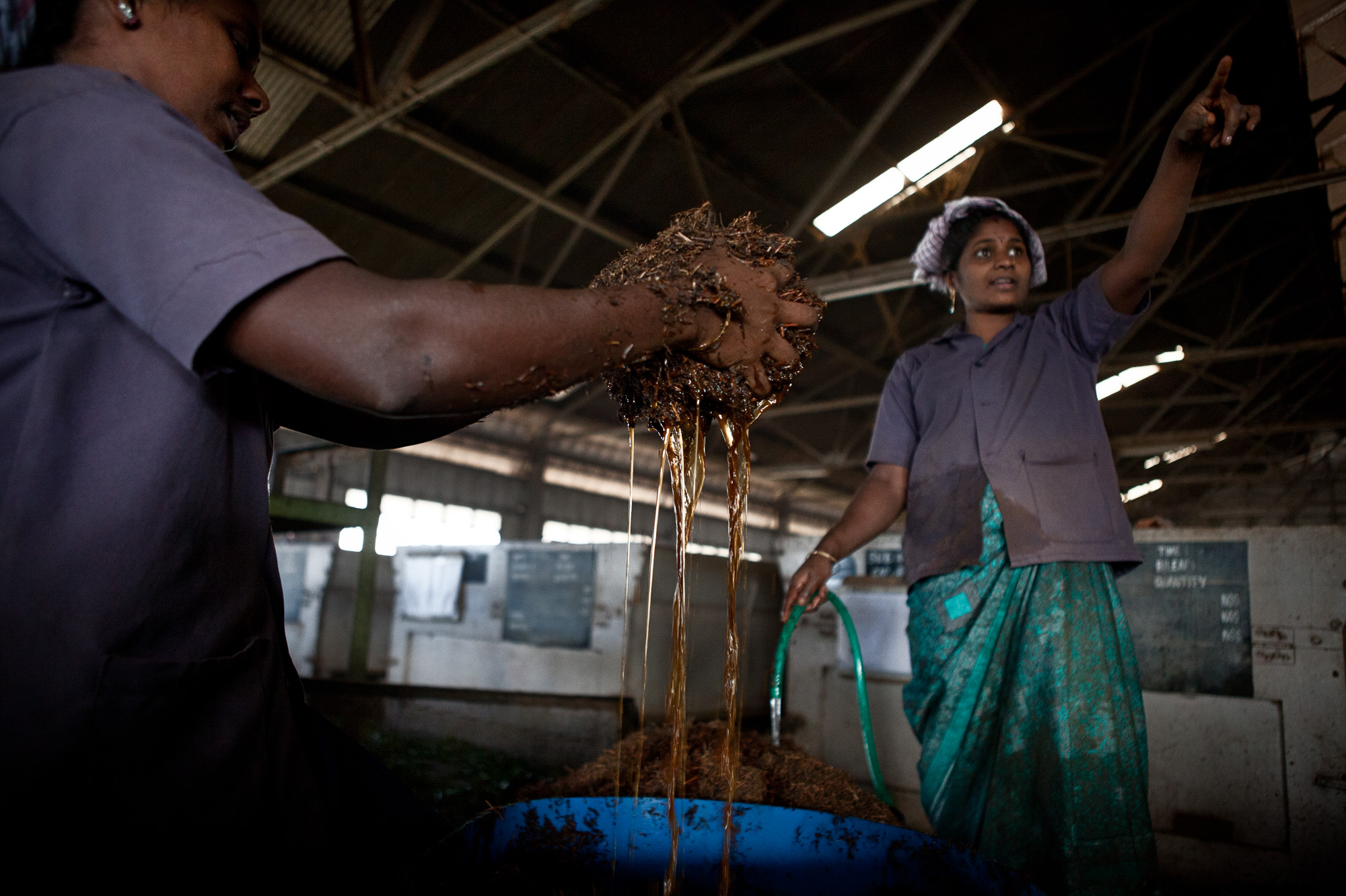 Women manually soak dried leaves before they are sent into a shredder and progress on to the CTC process.  Similarly, as in the fields, there is a distinct absence of younger women, with the average age being around 35, it is the older women who are undertaking this work.  None of the younger generation are interested in working in this comparatively lowly paid and unskilled industry.