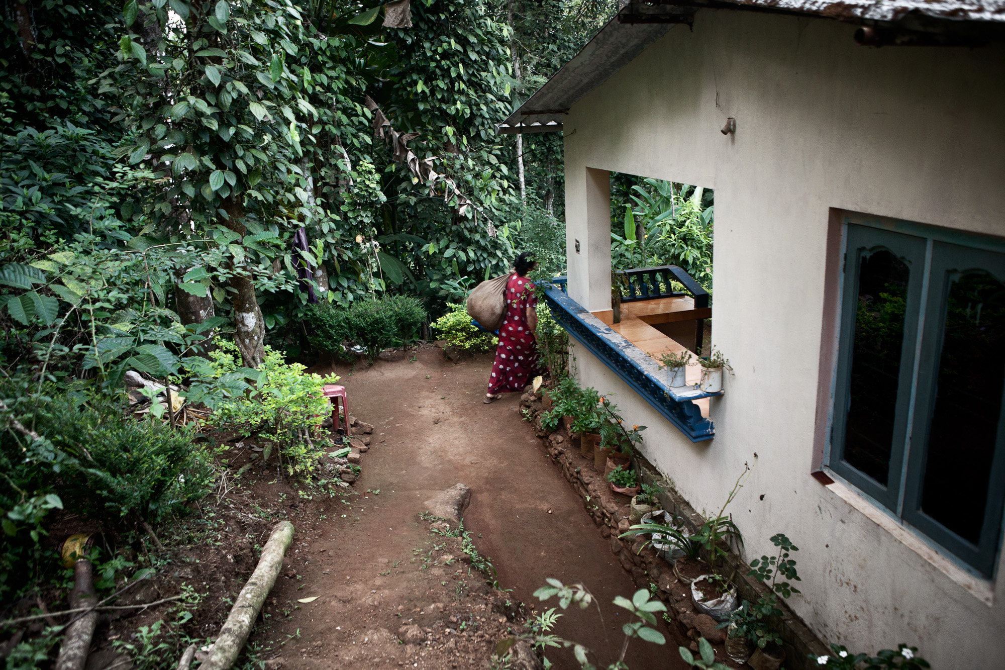 Bavani, arriving home for a short break before leaving to attend to her evening job serving in one of the manager's bungalows.  The shortage of available female labour means that some women can supplement their income with a second job.