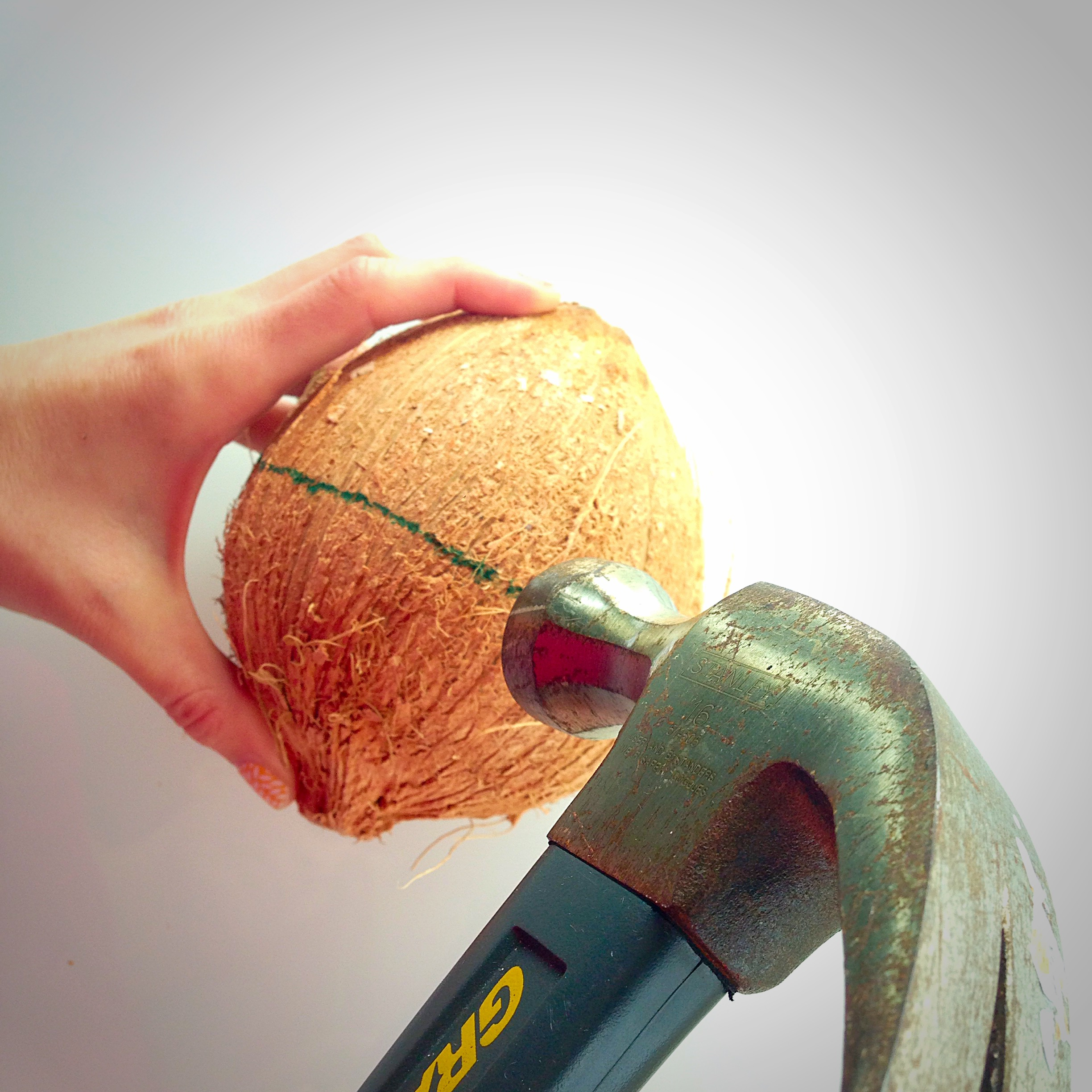 The best way to do this is to hold the coconut in one Palm while hammering it with the other hand
