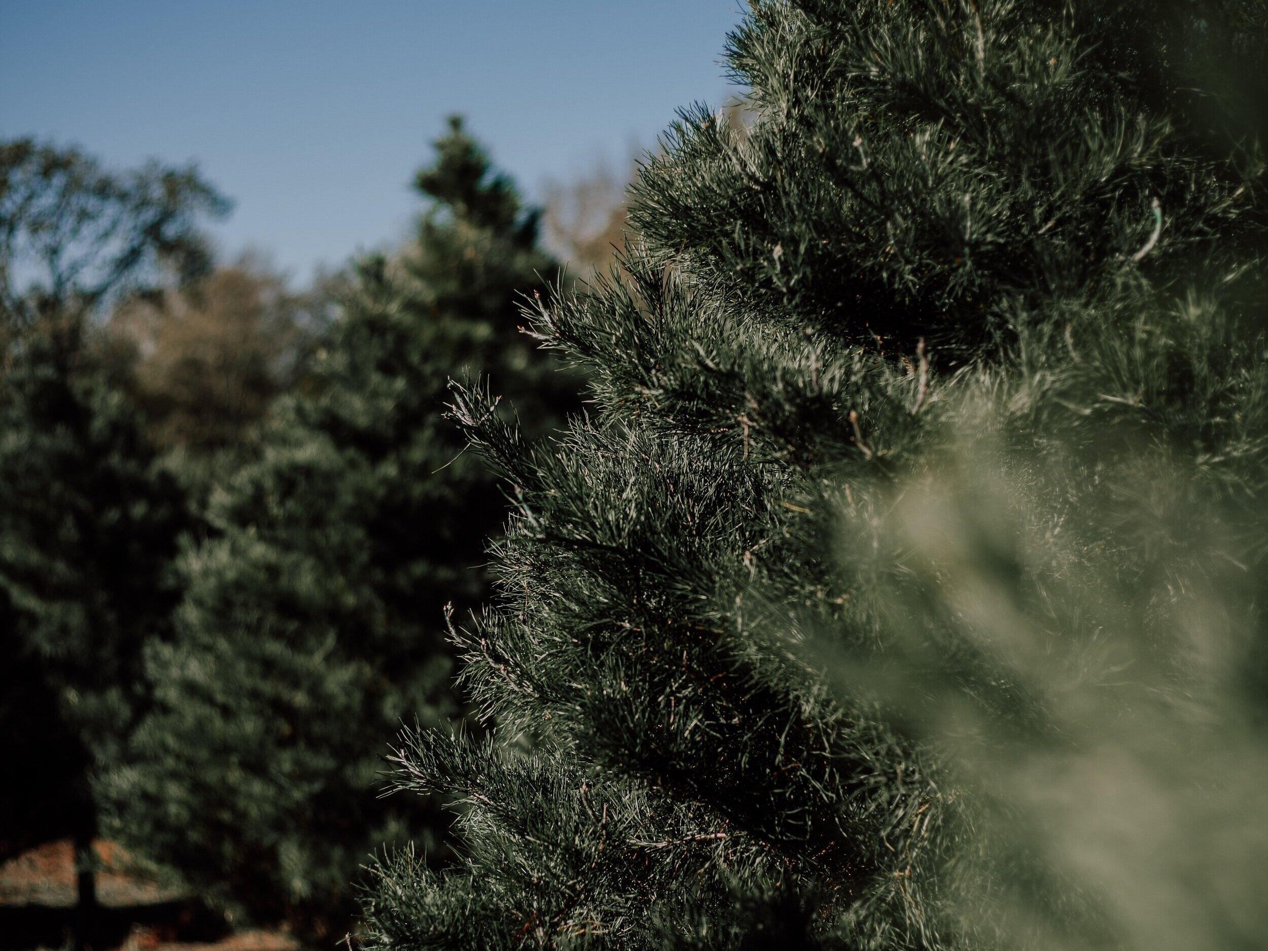 November 17th, - 10am- 4pmAddison OaksChristmas Tree Farmin Oakland, Mi