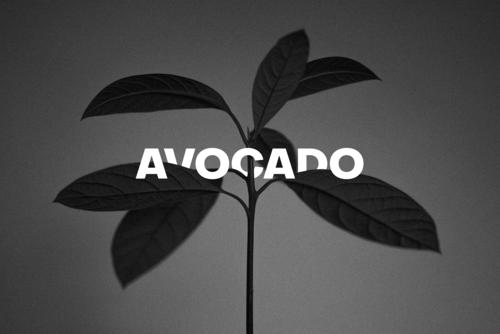 авокадо4.png