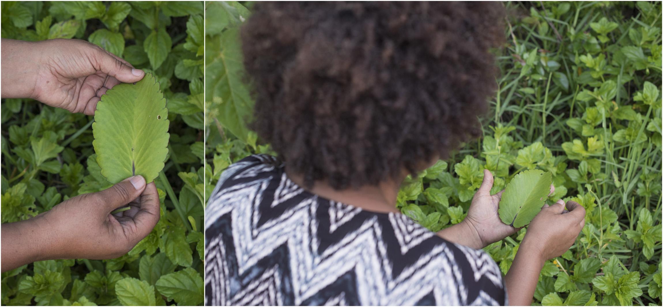 ©FianderFoto_Winnow_Five Senses Wild Edible Herbal Tour_001.jpg