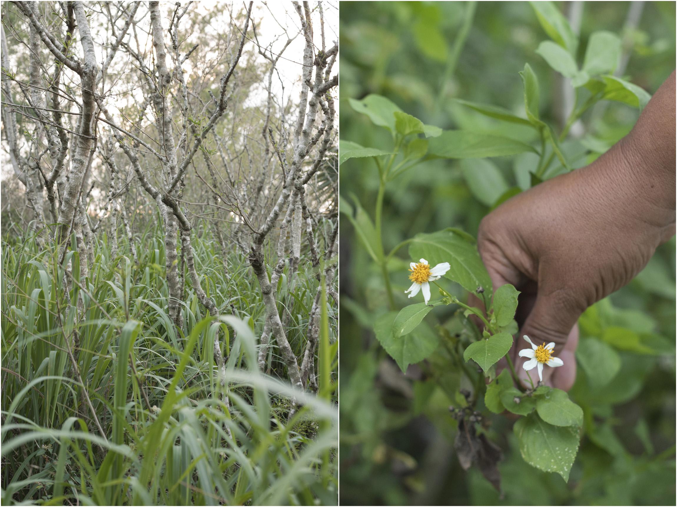 ©FianderFoto_Winnow_Five Senses Wild Edible Herbal Tour_004.jpg