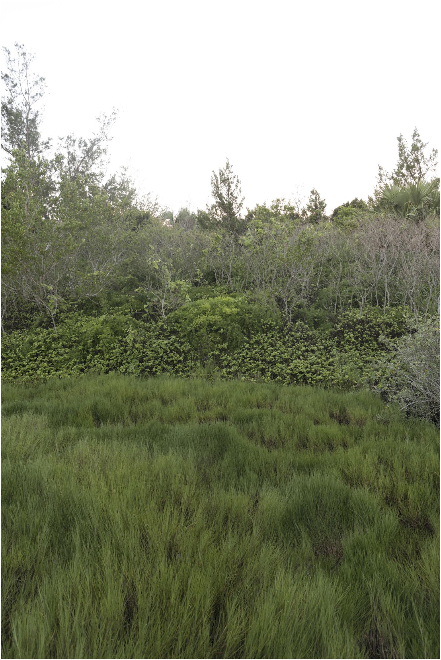 ©FianderFoto_Winnow_Five Senses Wild Edible Herbal Tour_008.jpg