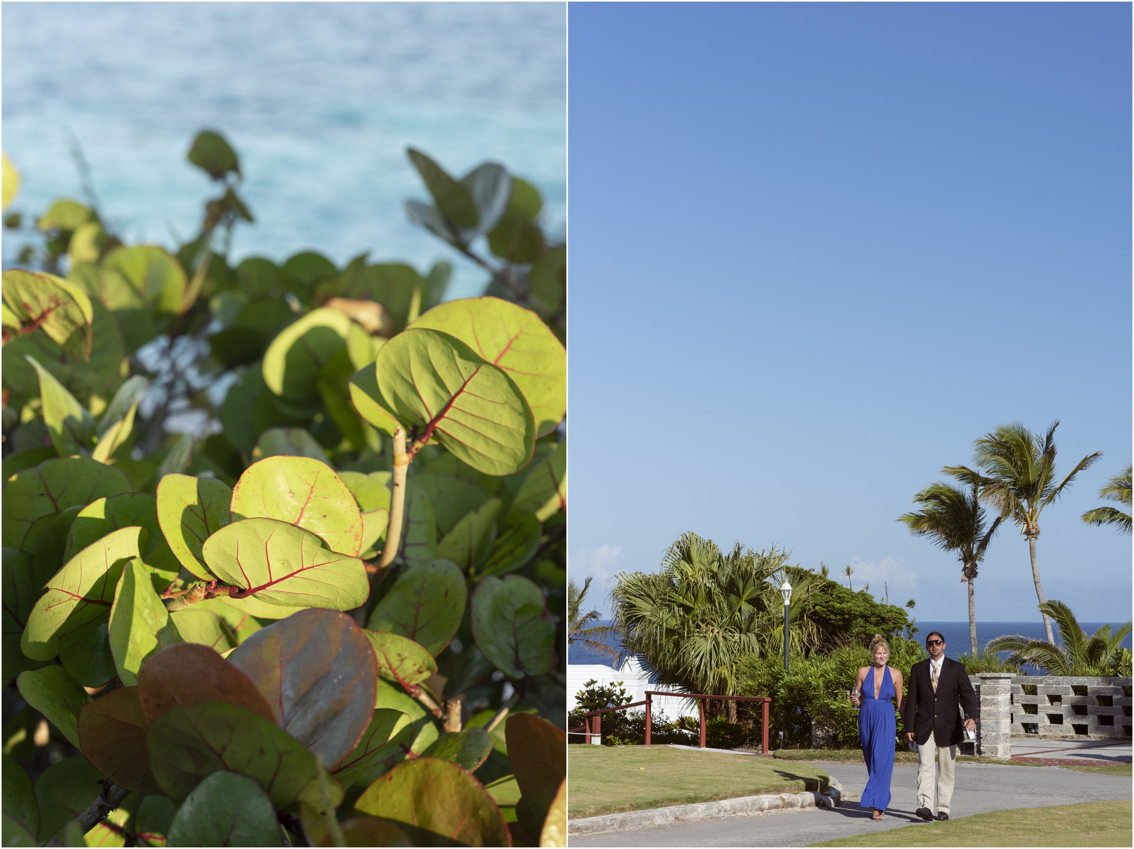 ©FianderFoto_Catherine_Kenny_Coral Beach Wedding_179.jpg