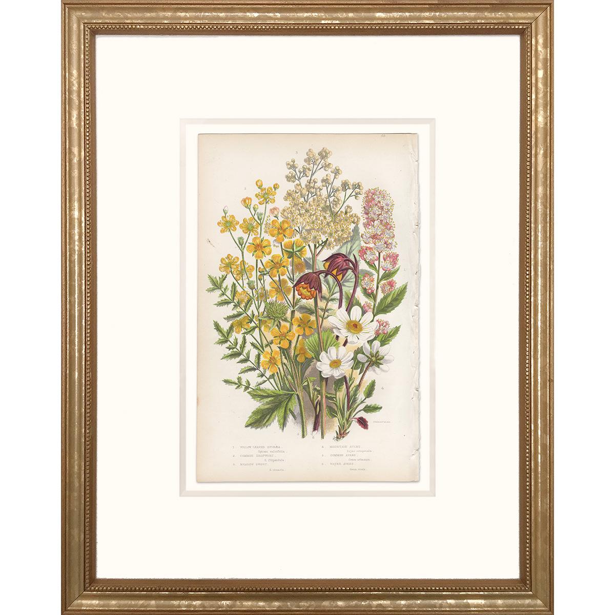 Anne Pratt Plate 66 Spiraea, Dropwort, Avens - Framed print