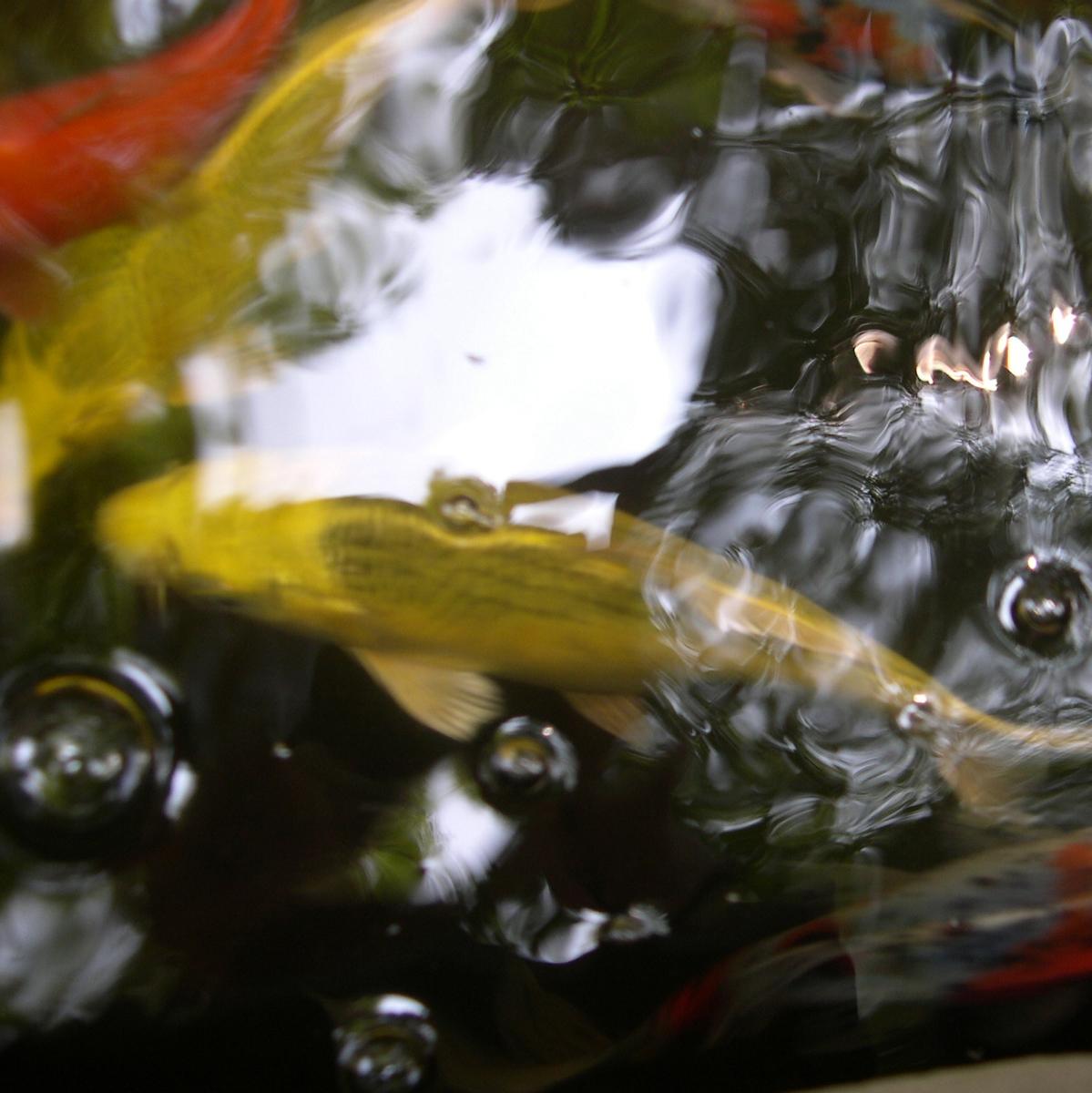 1 phoo fish.jpg
