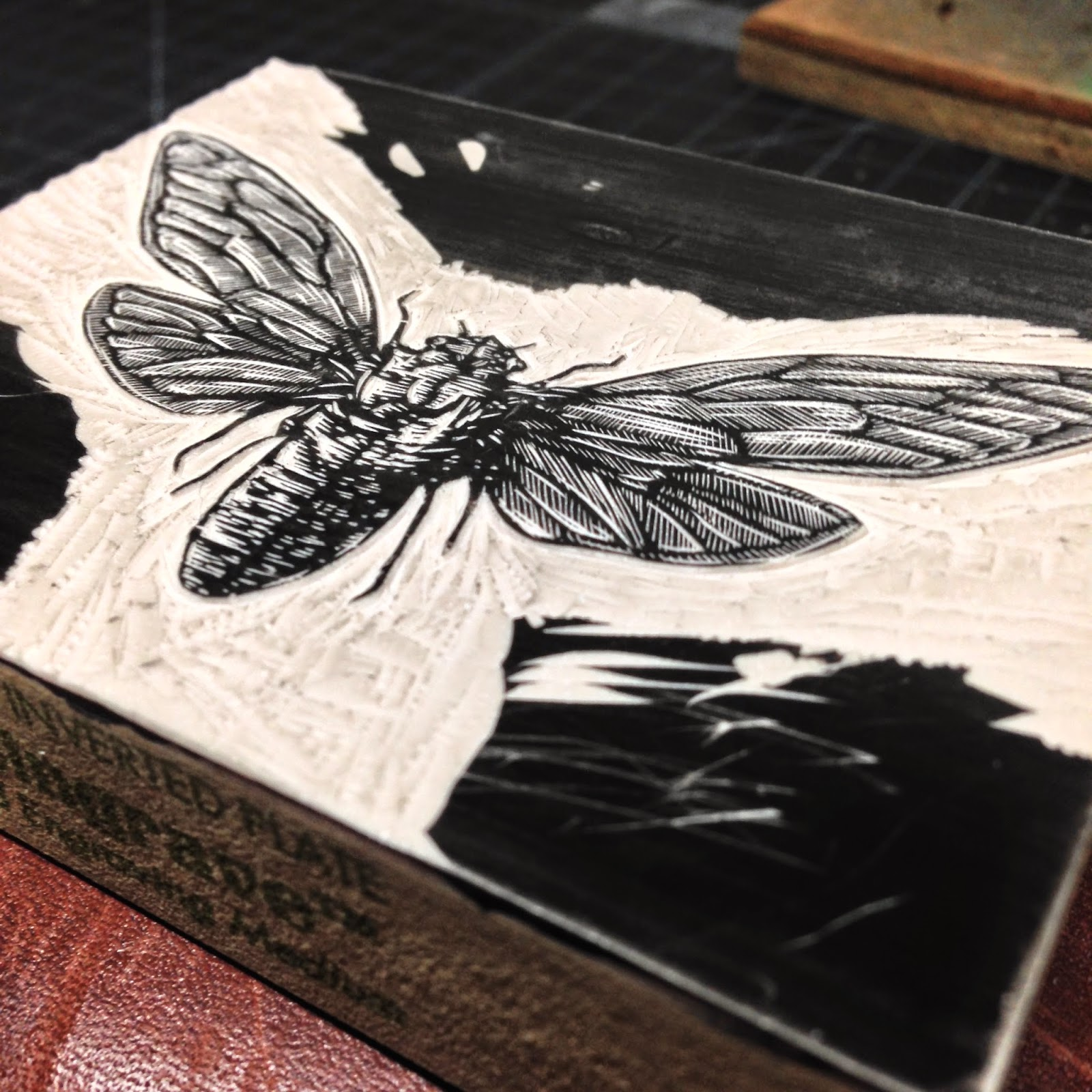 The actual Cicada is finished. The final step was to clear out all of the remaining area around the insect, allowing for just the cicada to print on the paper.