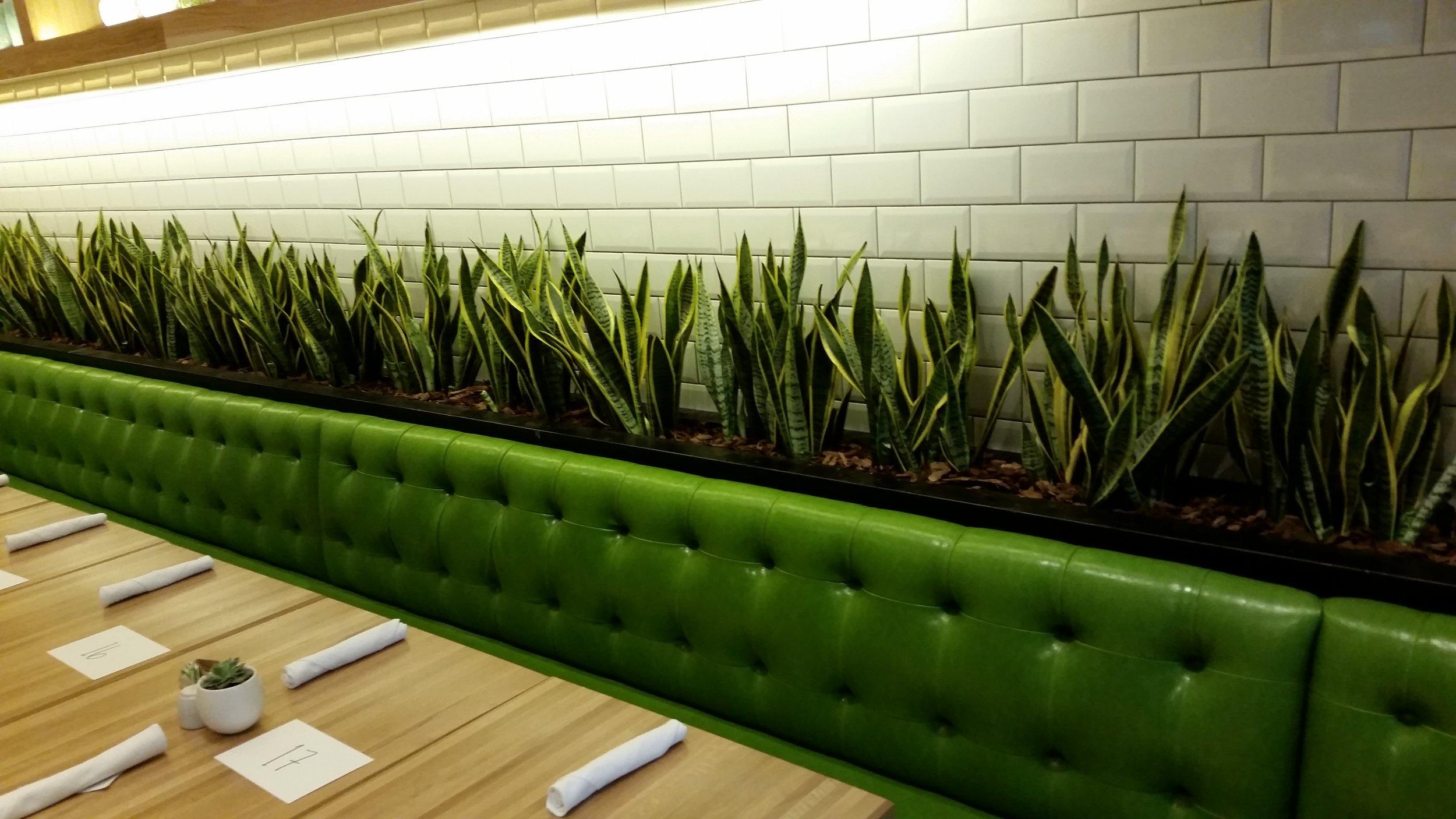 True Food Kitchen Planter Behind Seating