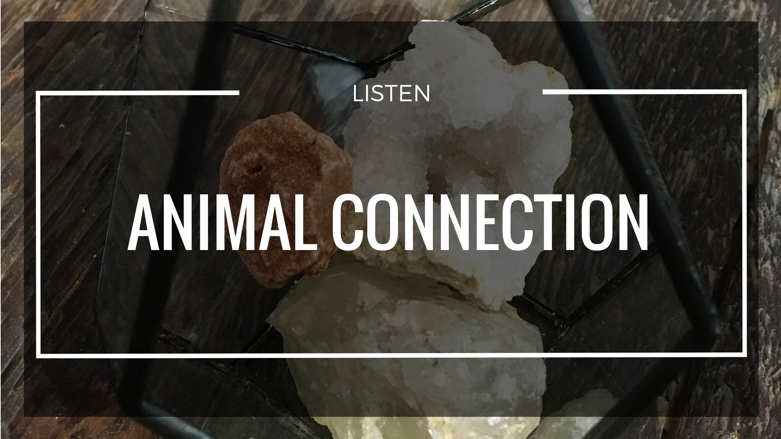 - Find your totem animal, or simply connect with different animal allies to discover the energetic connection they hold and how this can bring power, awareness, and healing into your life.