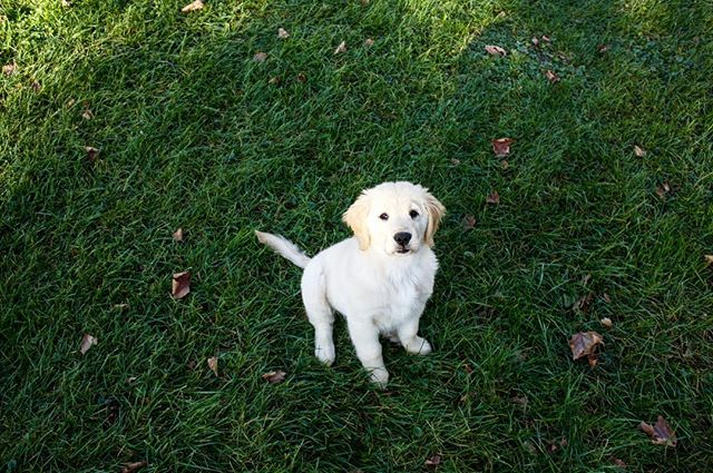 Instagram, meet Beatrice! My parents new pup. #beaforpresident