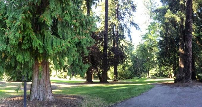 PortlandForest.jpg