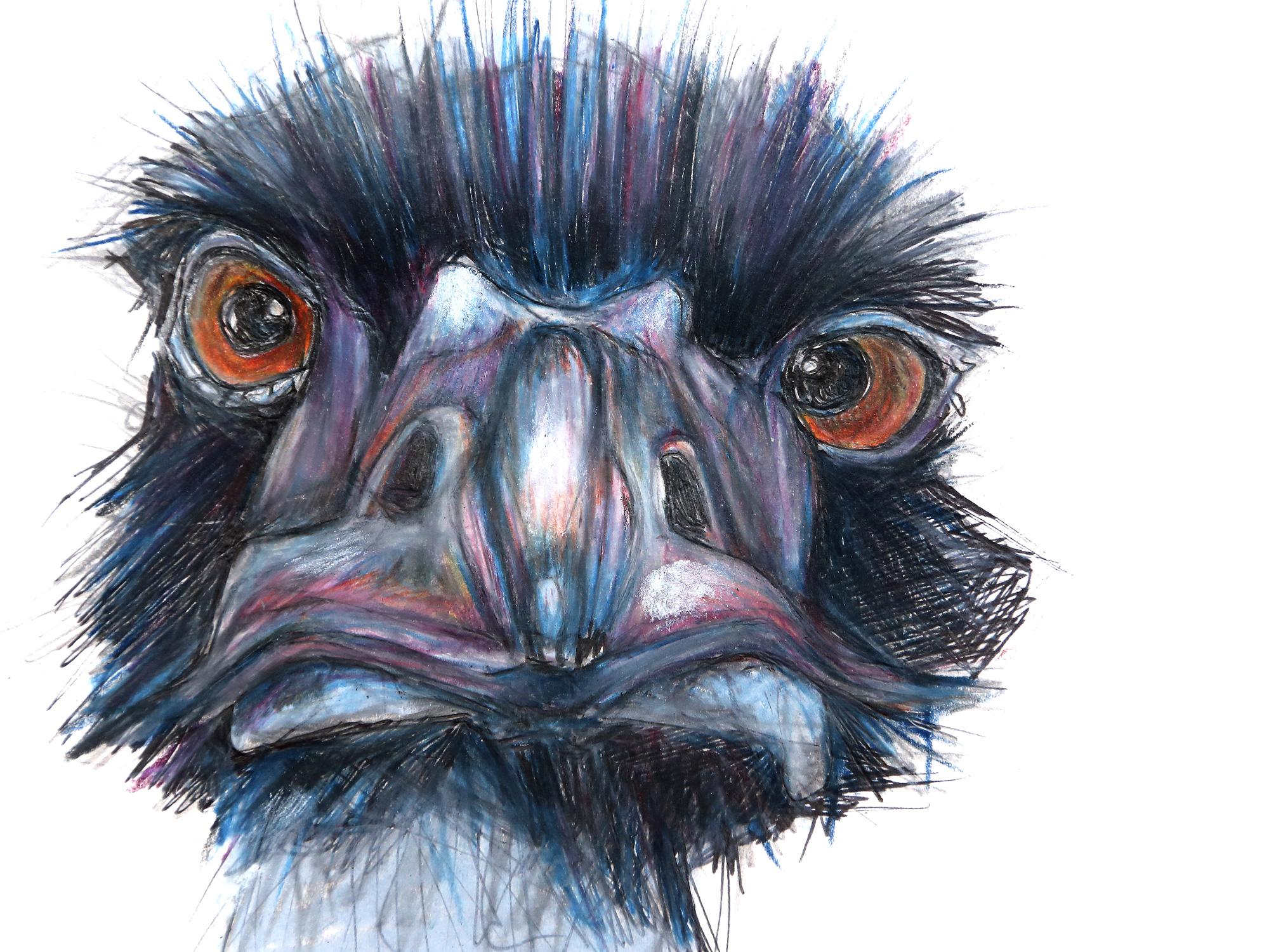 baby-ostrich.jpg