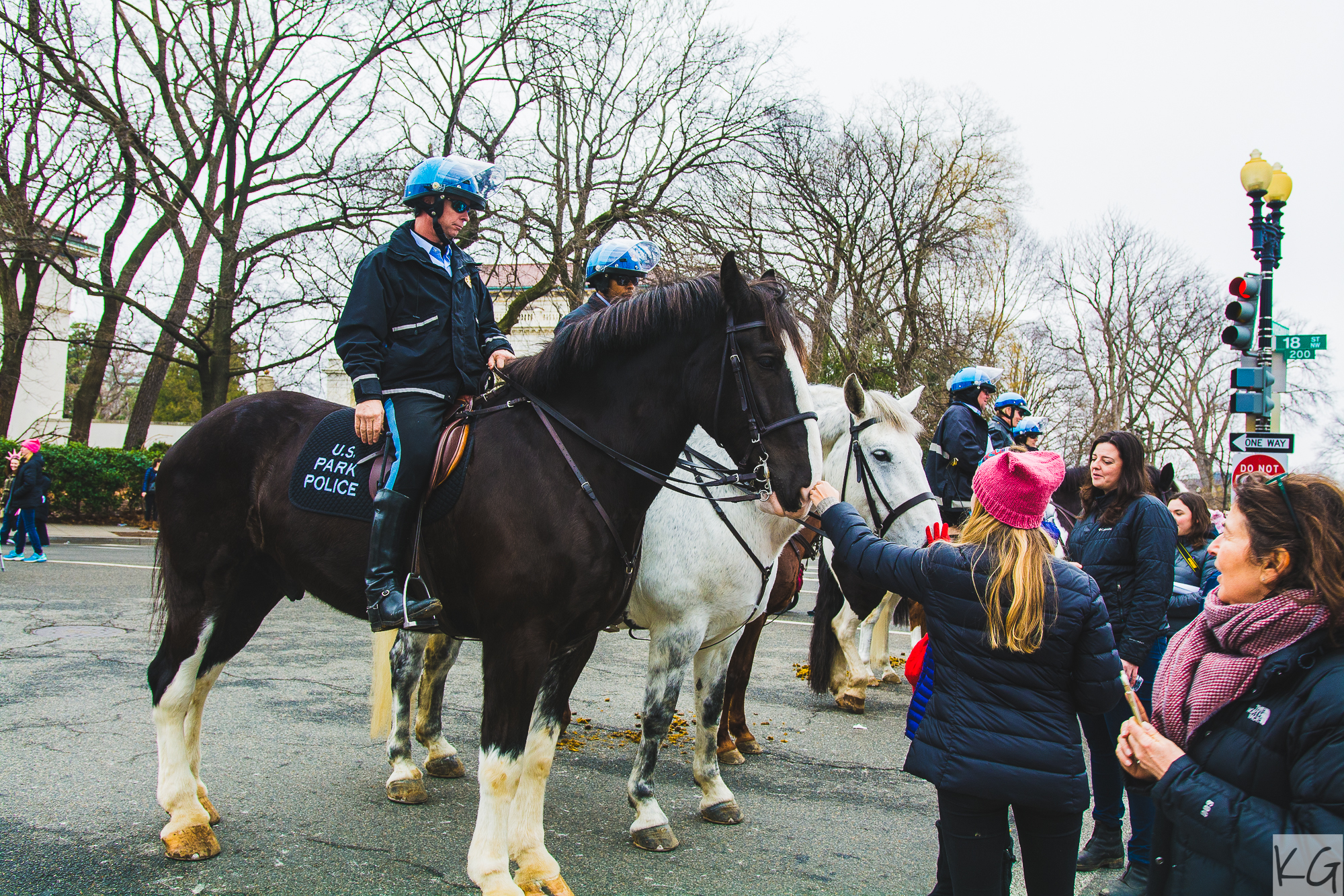 Police horses hanging out