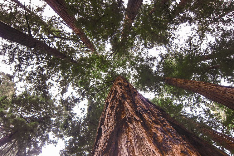Muir Woods is a magical place.