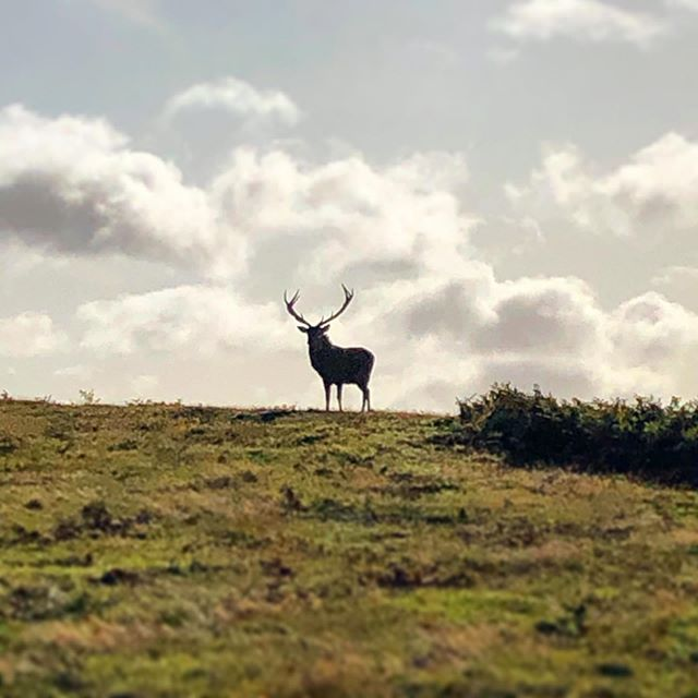 Just a girl standing in front of a stag #outdoormoments #momentsoutside #bradgatepark #beautifulbeasts #deerpark #countrywalks #leicestershire #nationalforest #charnwood #charnwoodgem