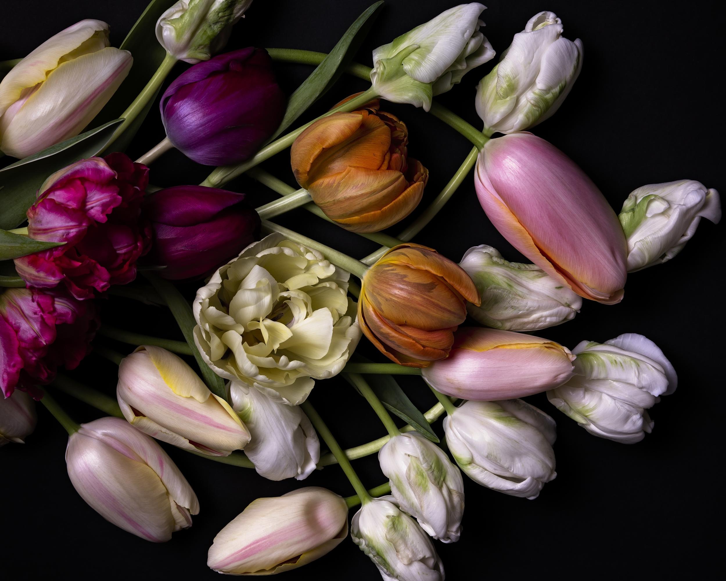 tulips--8.jpg