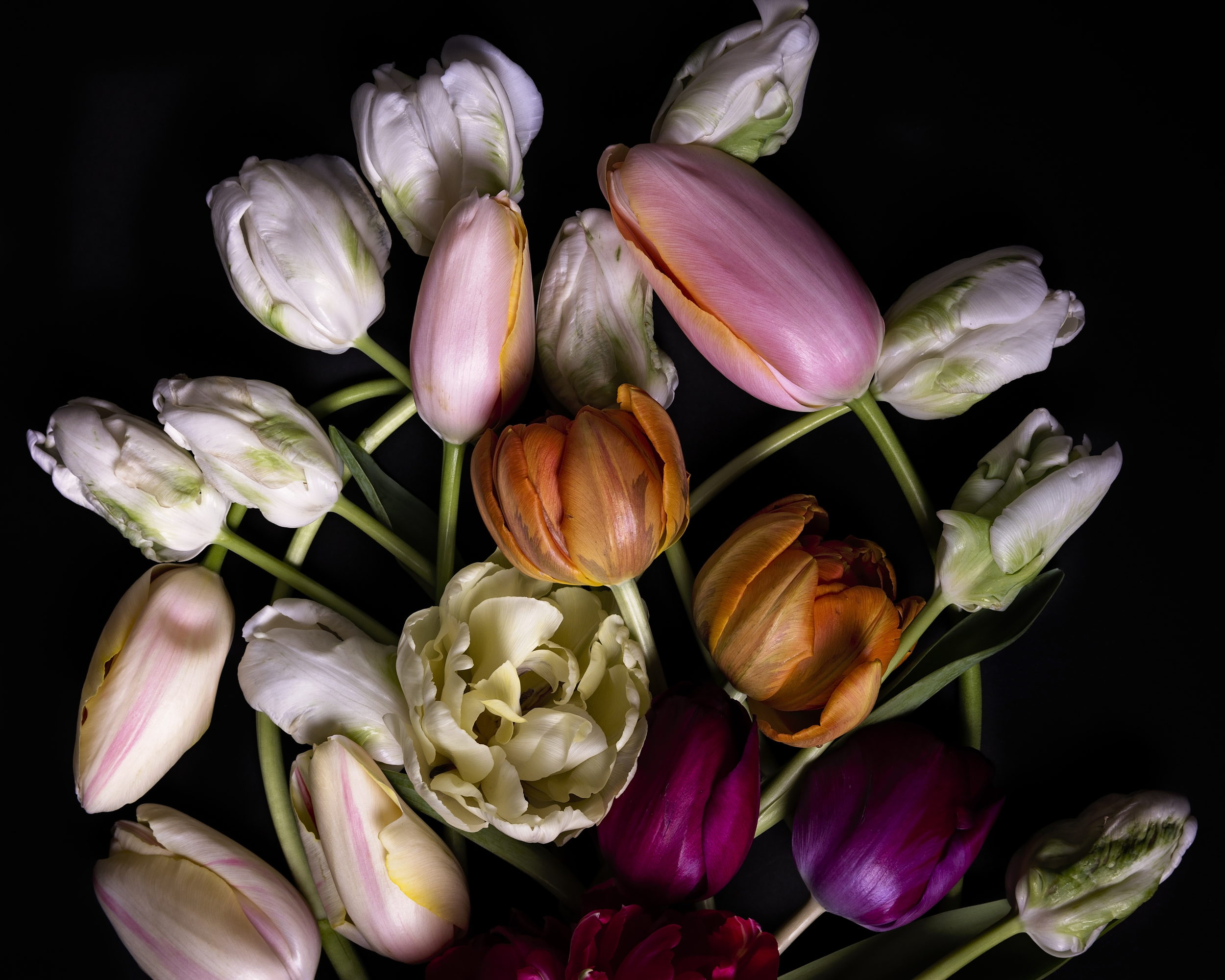 tulips--6.jpg