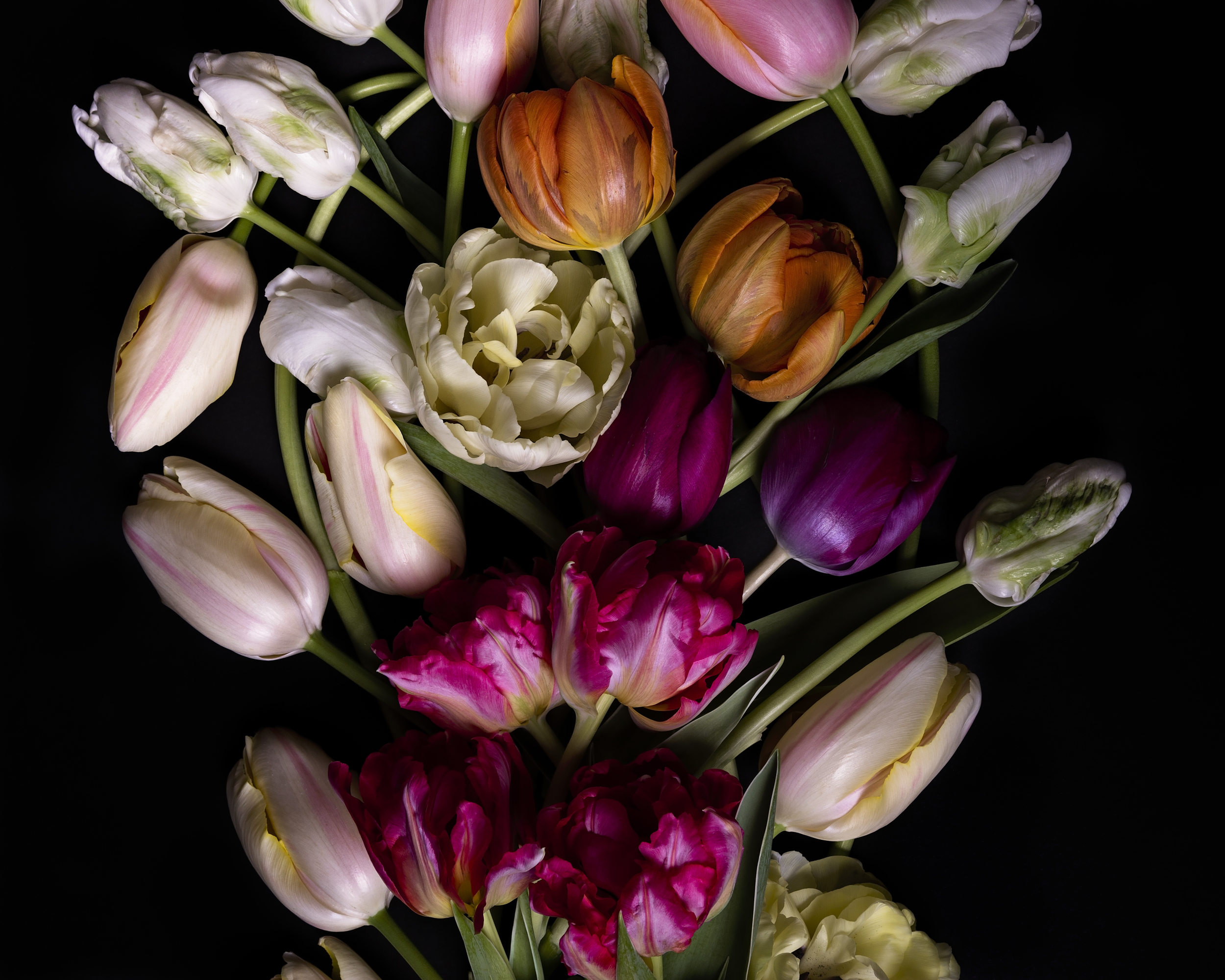 tulips--5.jpg