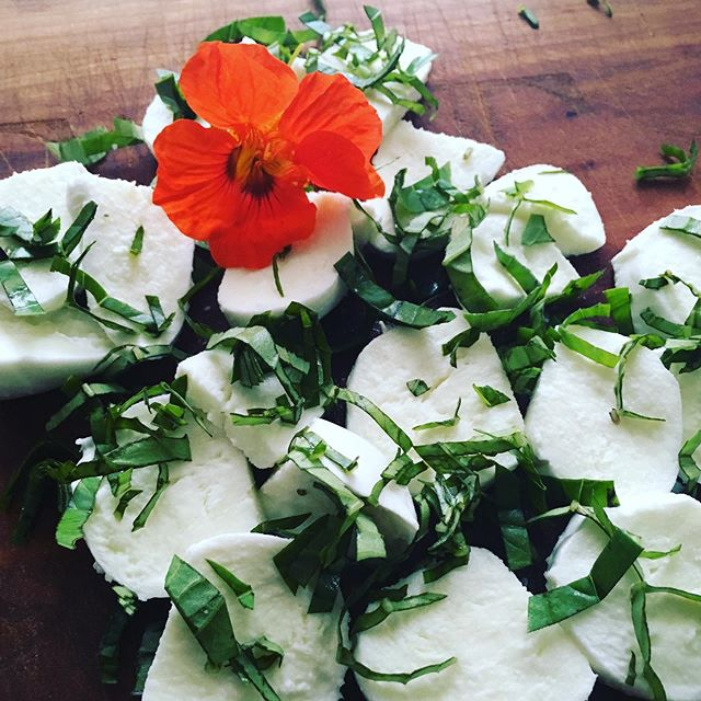 If fresh buffalo mozzarella could be picked from the garden right along with basil my meals would be planned for the next month! #tasteofsummer #bufala #freshmozzarella #thinkingofsimona #thanksdavid