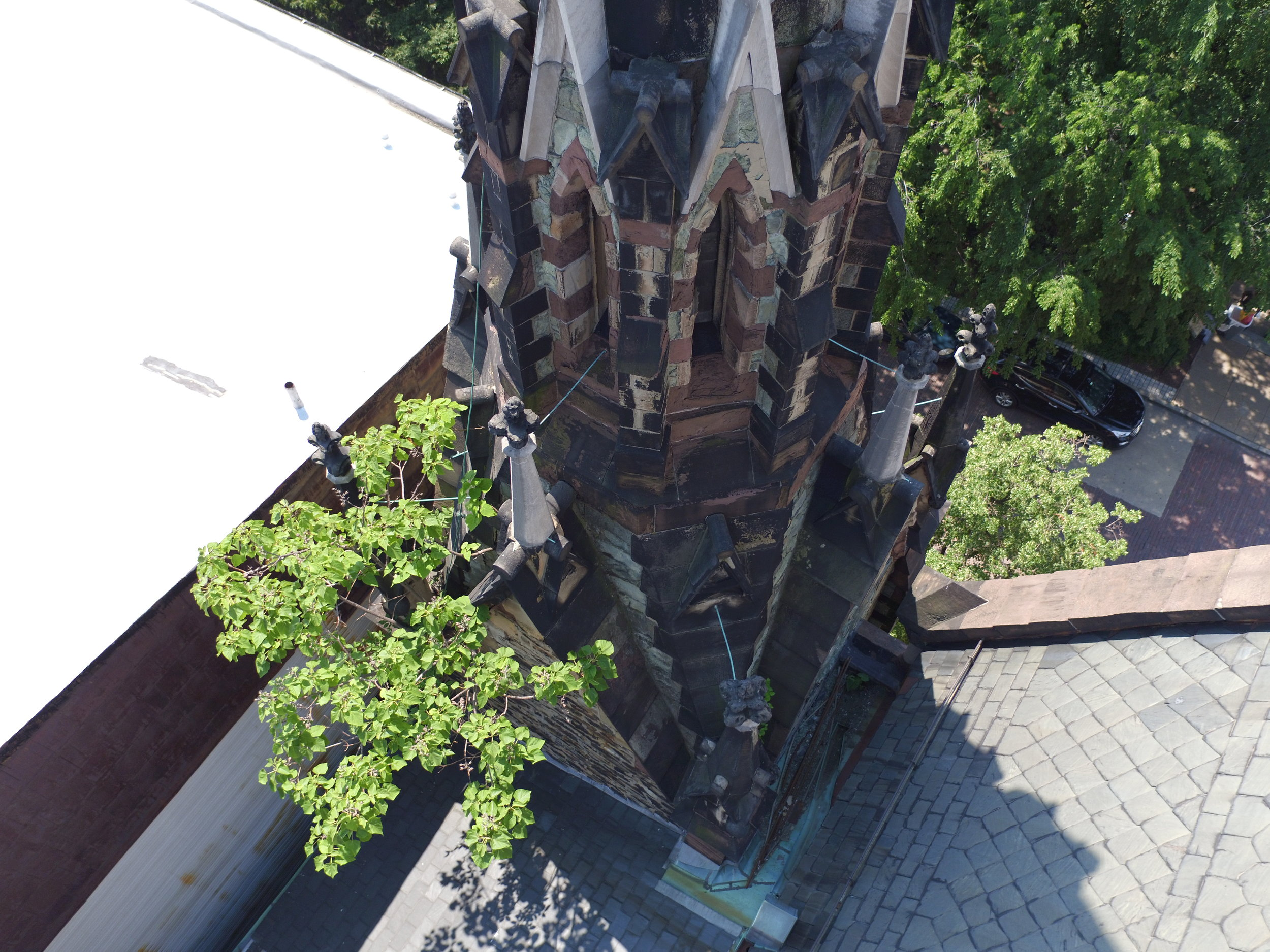Church Spire with Tree Growth (!!)